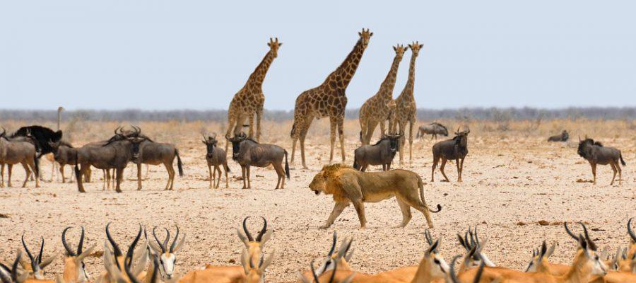 På turen vil vi se mange flotte dyr!